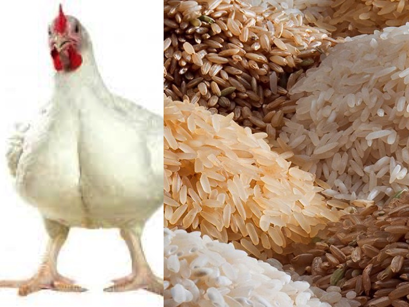 Chicken and Rice, World citizens….